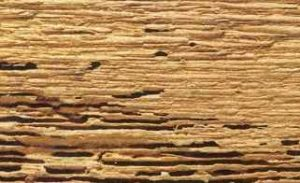 Woodworm Damage To Timber